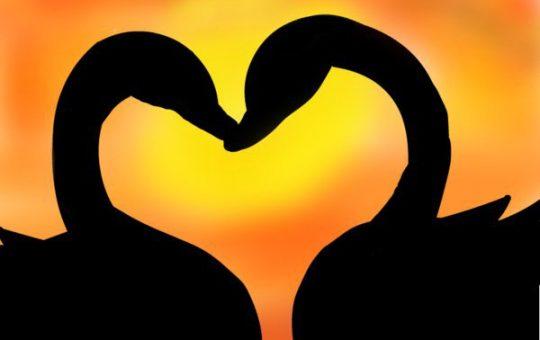 instant true love spell